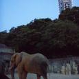 夕暮れ動物園